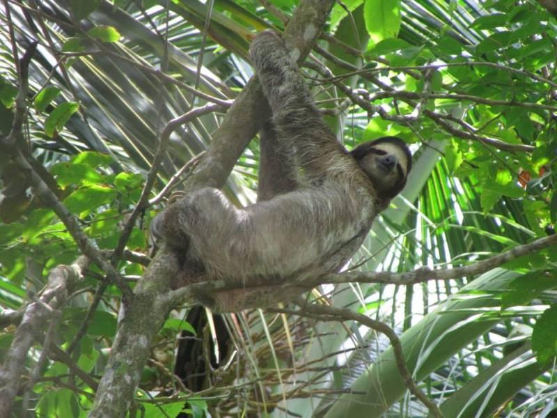 Montezuma: la biodiversidad de Costa Rica a tu alcance
