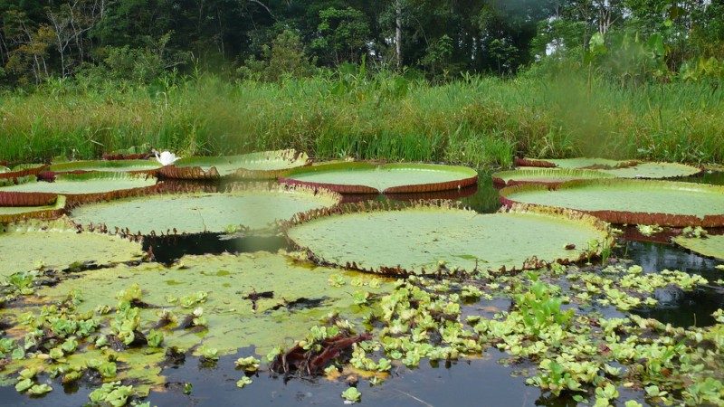 Leticia Amazonas, la pequeña ciudad de la punta sur de Colombia