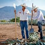 Tequila Jalisco: el origen de la bebida mexicana más famosa