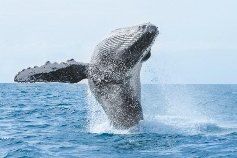 Avistamiento de ballenas en México: la Riviera Nayarit, una excelente opción