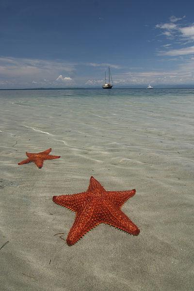 Las mejores playas en Bocas del Toro