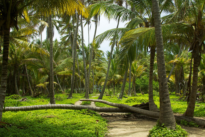 palmeraspark