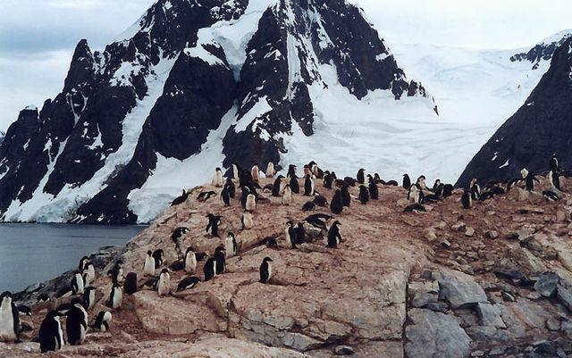 Expedición a la Antártida, una aventura al fin del mundo