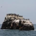 Visite las Islas Ballestas y observe variedad de fauna. By Lisa Weichel - Paracas Bay and Ballestas Islands, CC BY 2.0