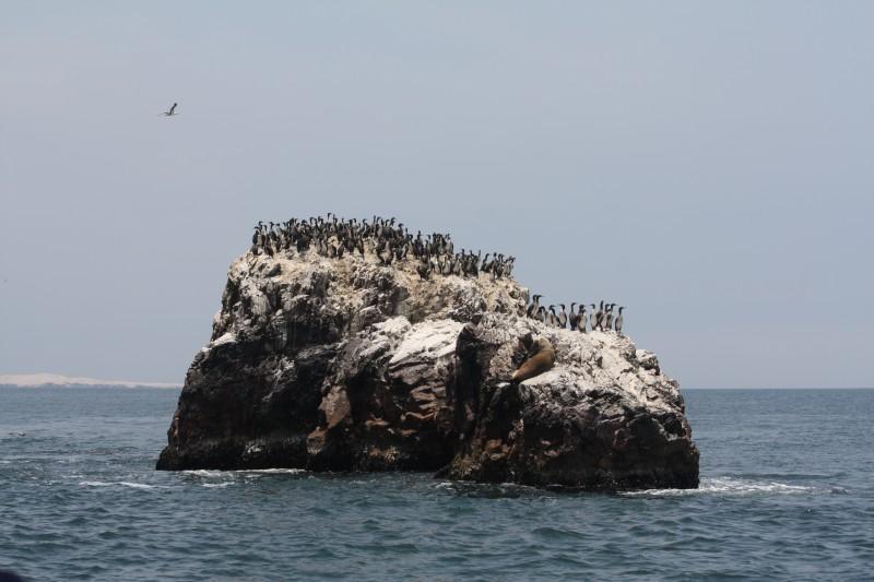 Tour a las Islas Ballestas: observación de fauna garantizada