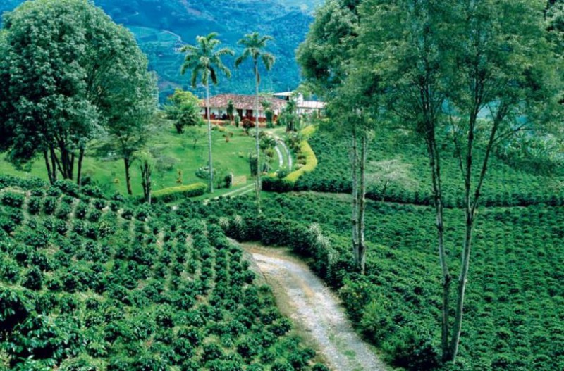 El café de Colombia para el mundo