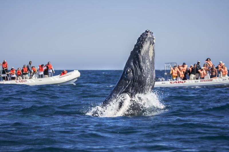 Avistamiento de ballenas en Los Cabos, México