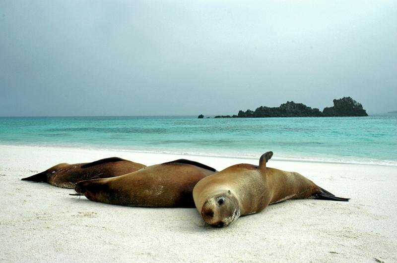 Islas Galápagos Ecuador