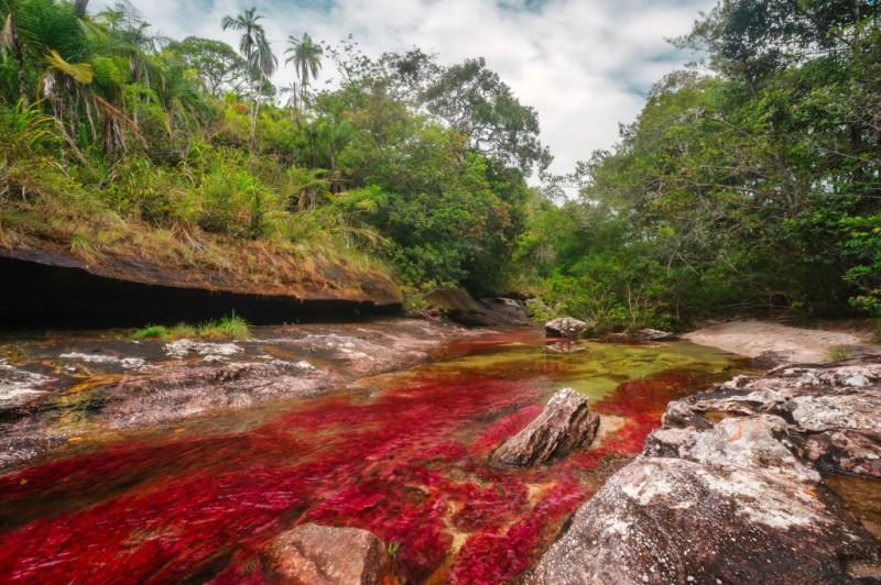 Caño Cristales: el río de los cinco colores