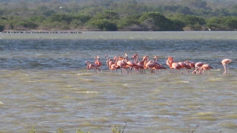 Ecoturismo en Colombia: explorando el Parque Nacional Natural Macuira
