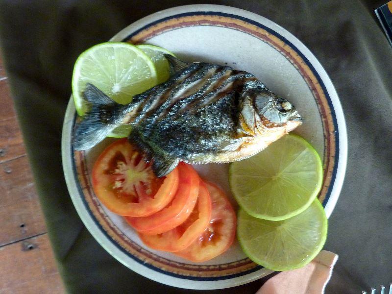1280px-2010-0117-Peru-piranha
